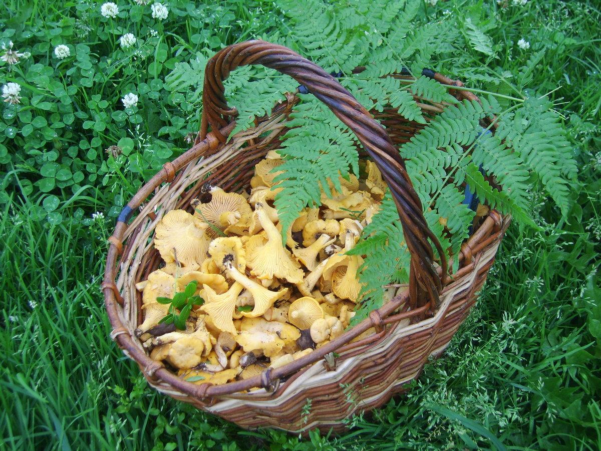 фото урожая грибов 3