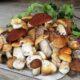 Грибы и грибные места в Белгородской области в 2021 году