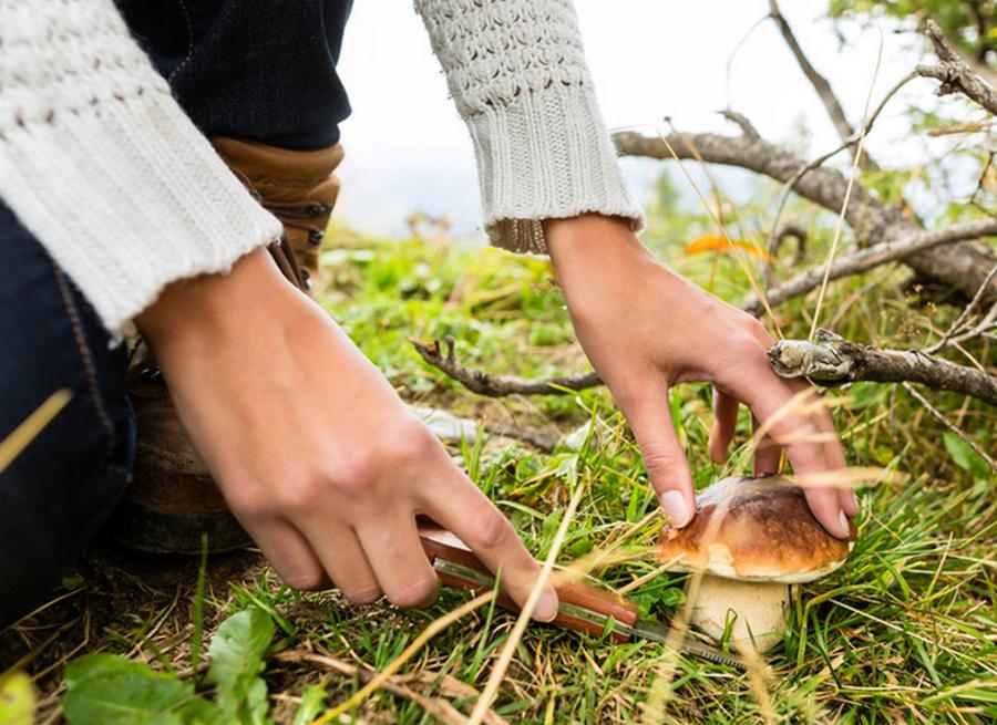 грибы и грибные места Карелии 2021 фото