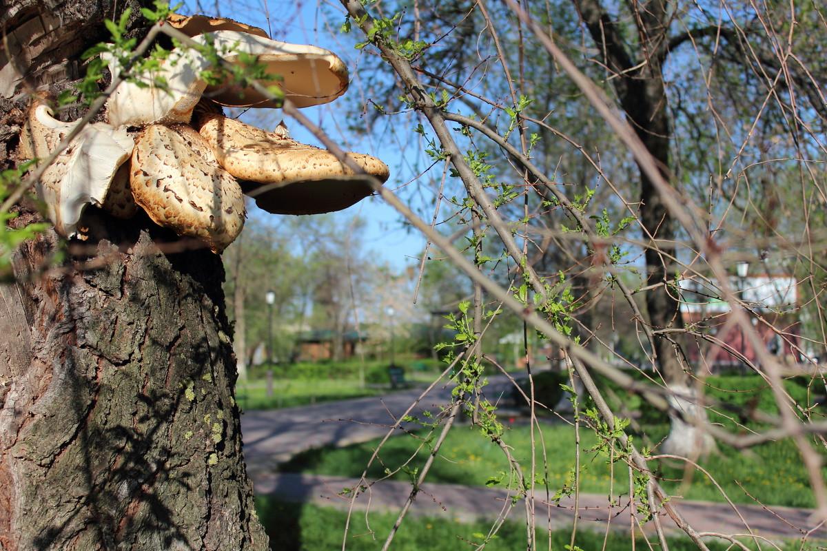 грибы в Орле и Орловской области, какие можно или нельзя собирать фото