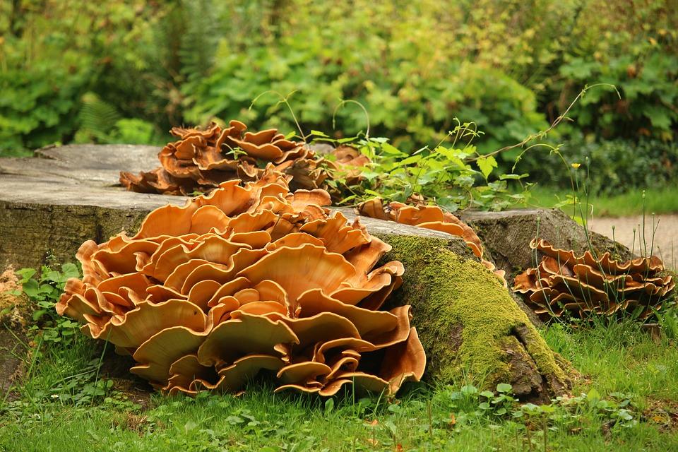 cбор грибов в Орловской области 2021 фото
