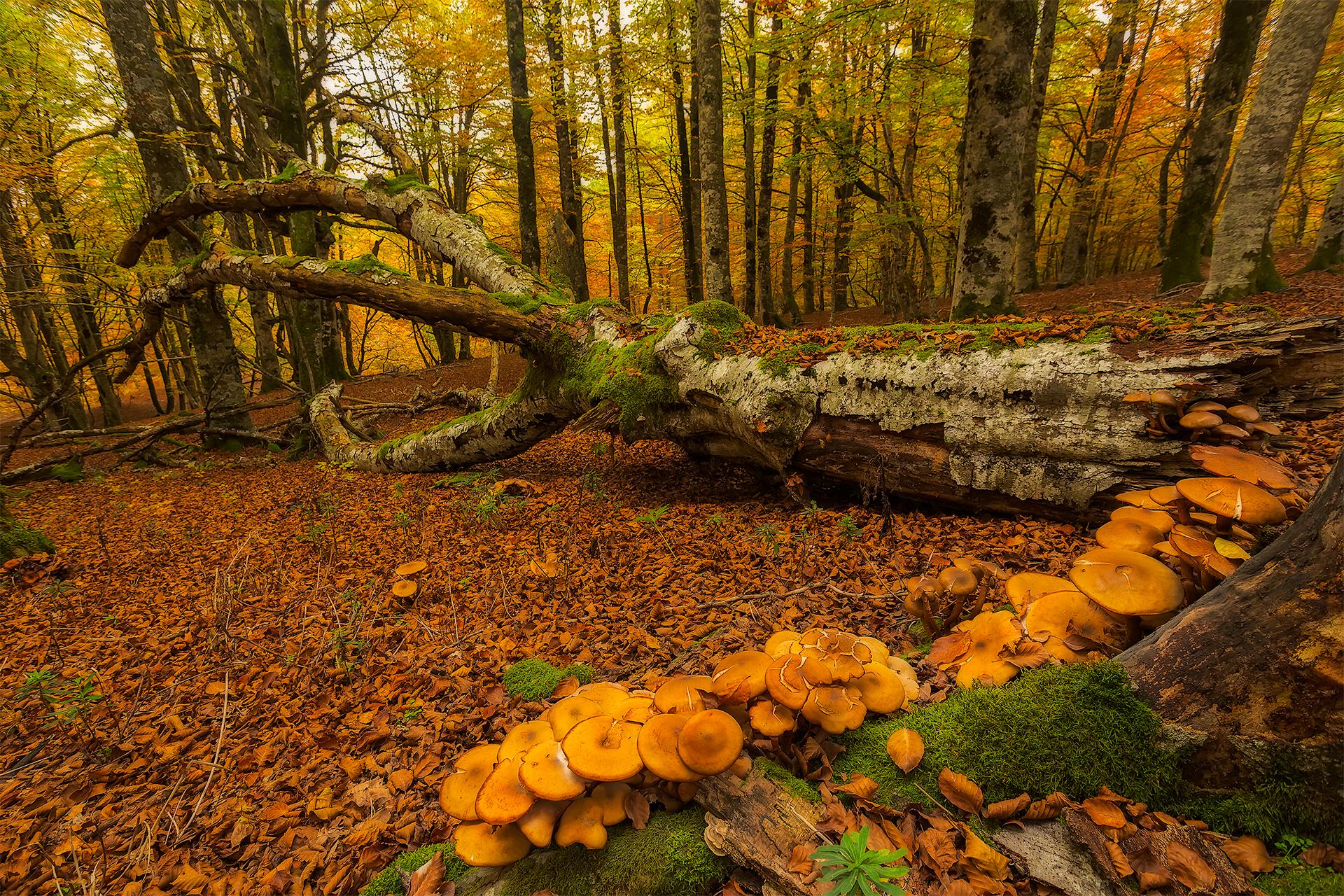 грибы и грибные места 2021 Саратовской области фото