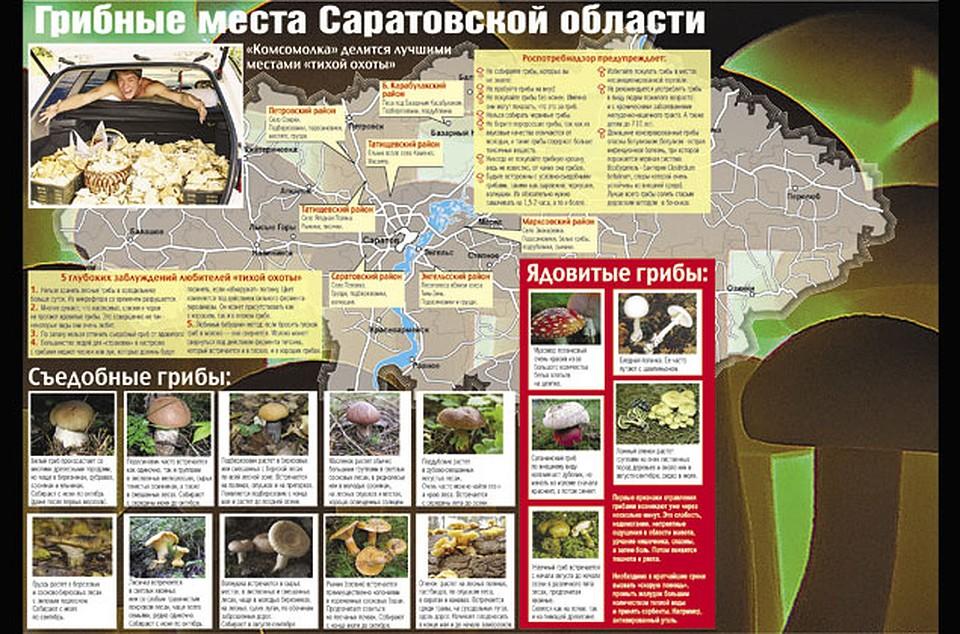 грибные места Саратовской области 2021, карта на фото 2