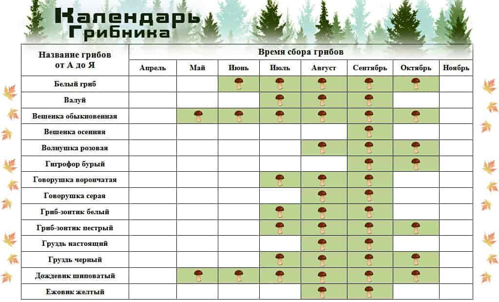 календарь роста грибов по месяцам фото 1