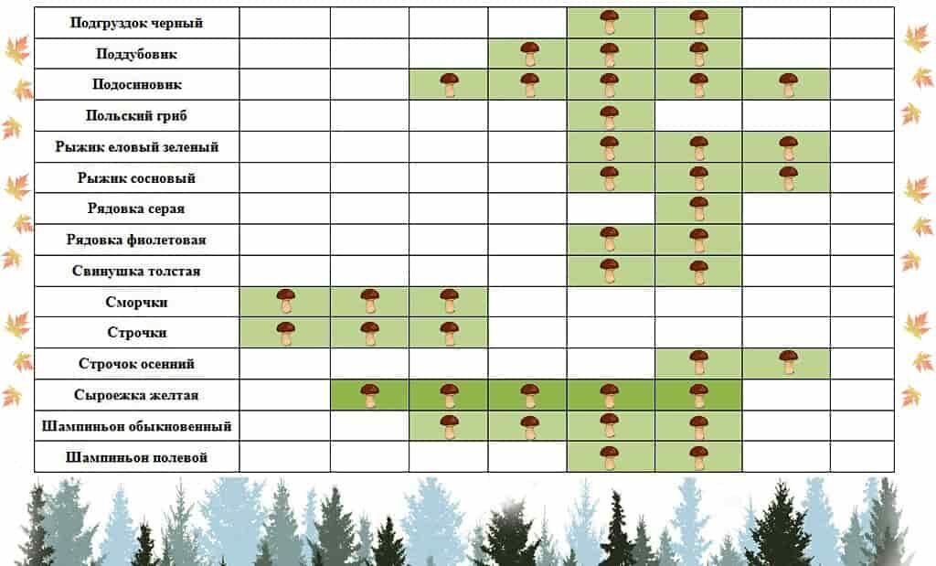 календарь роста грибов по месяцам фото 3