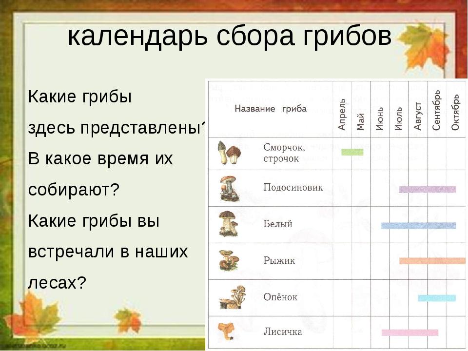календарь грибника с видами грибов на фото 1