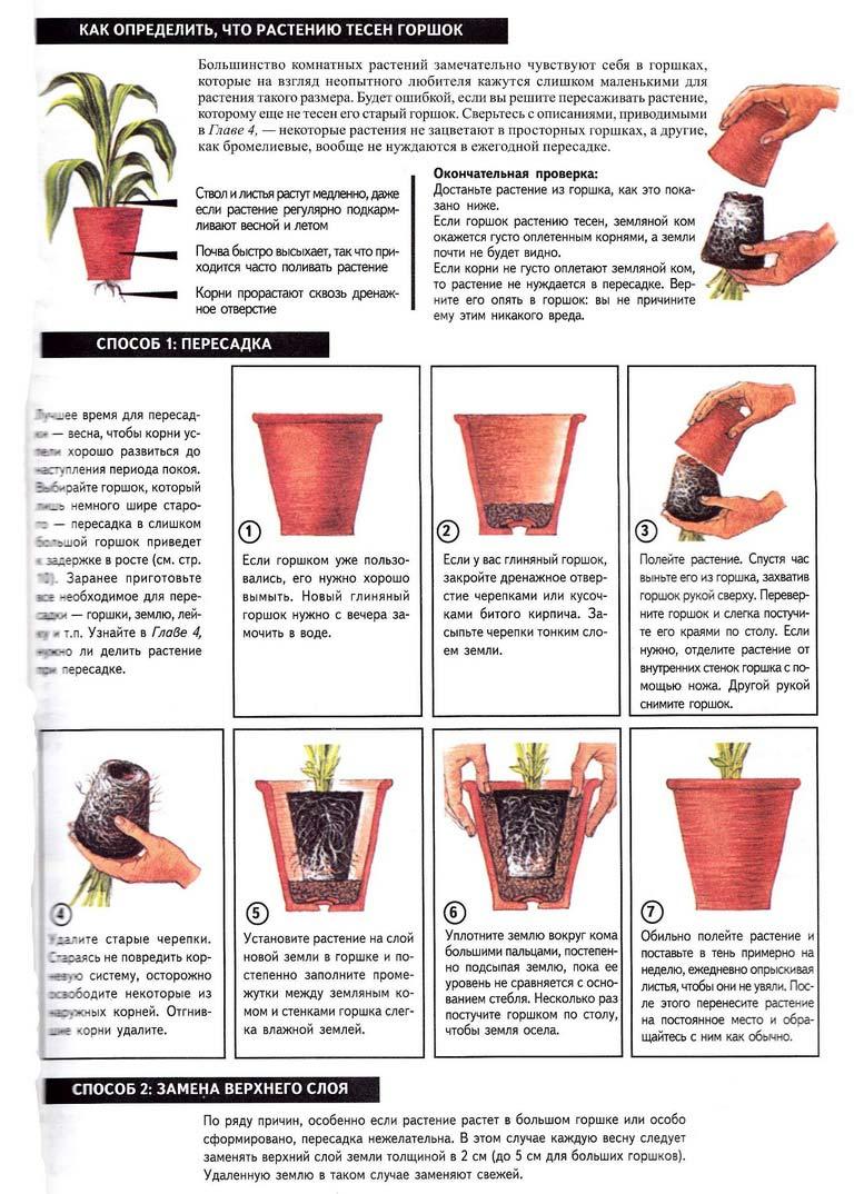 инструкция по Лунному календарю: как правильно пересаживать домашние растения фото 1