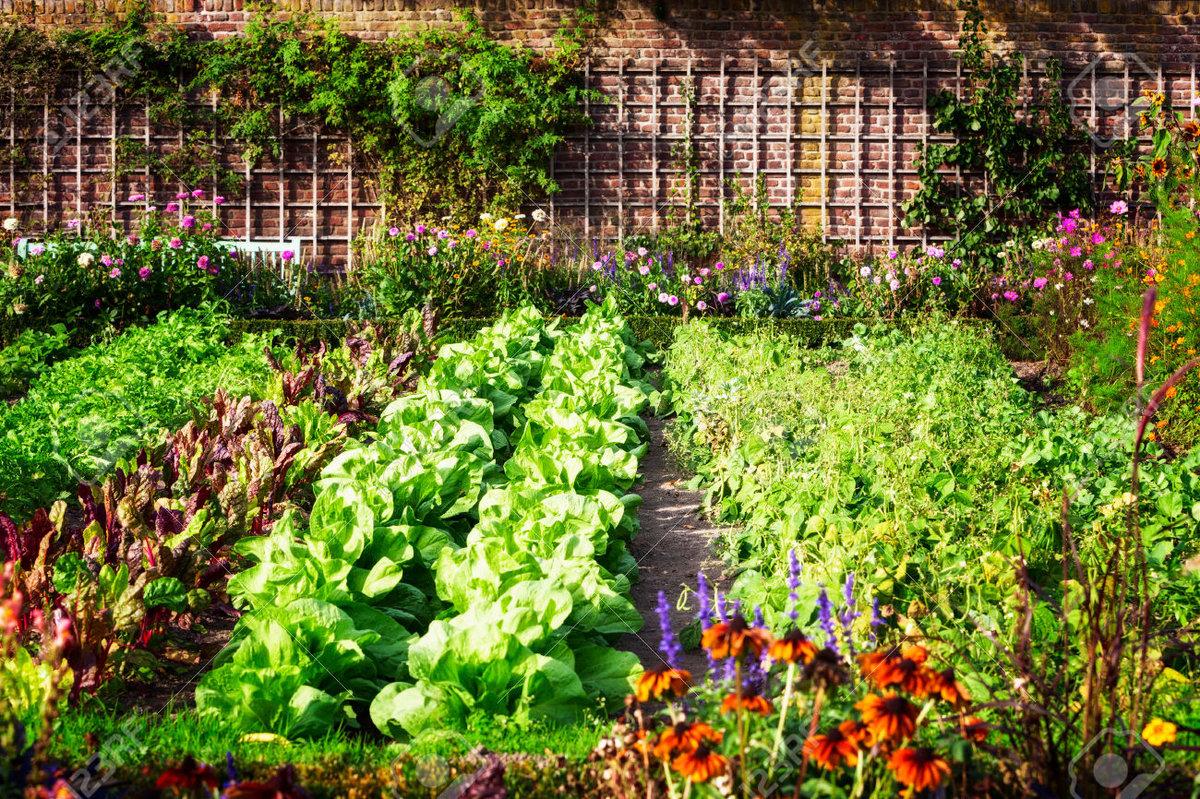 лунный календарь садовода и огородника на август 2021 года: наиболее благоприятные дни фото