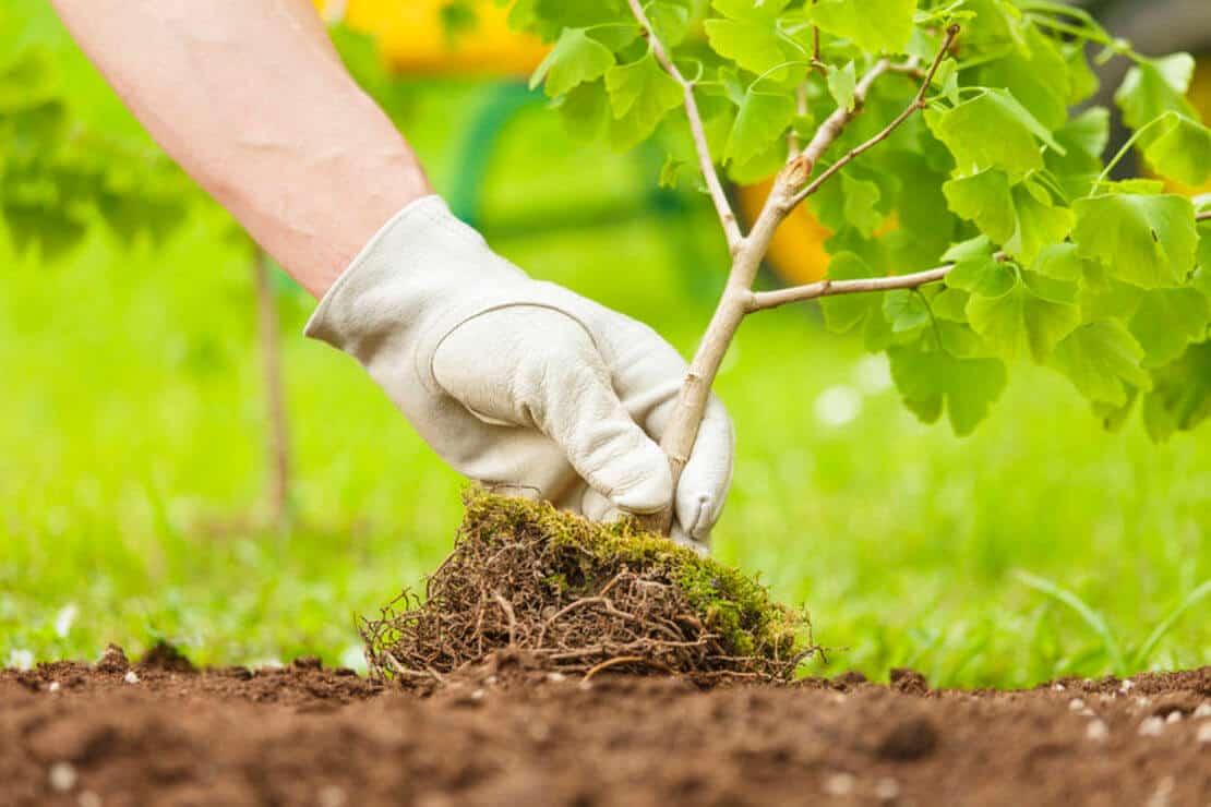 полезные рекомендации для садоводов и огородников фото