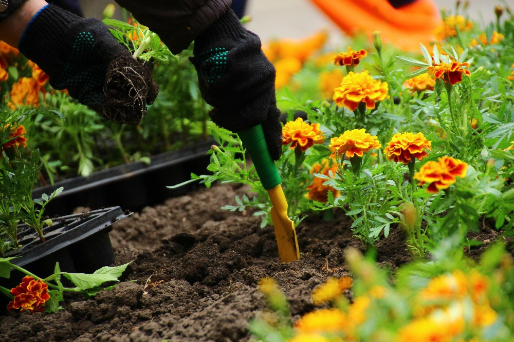 благоприятные дни для цветника: цветов и растений фото