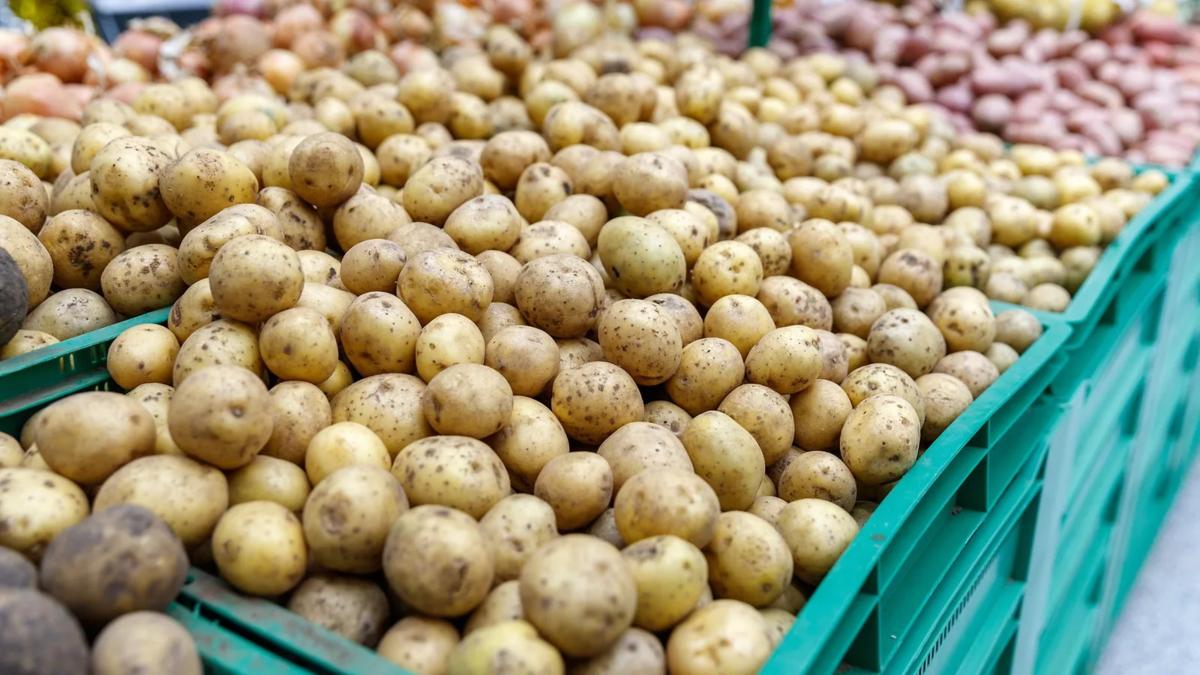 какая цена на картофель была в 2019 году фото