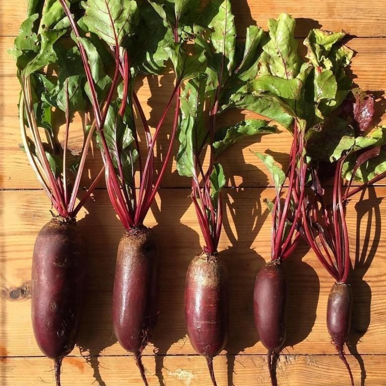 как собирать урожай? Рекомендации и советы фото