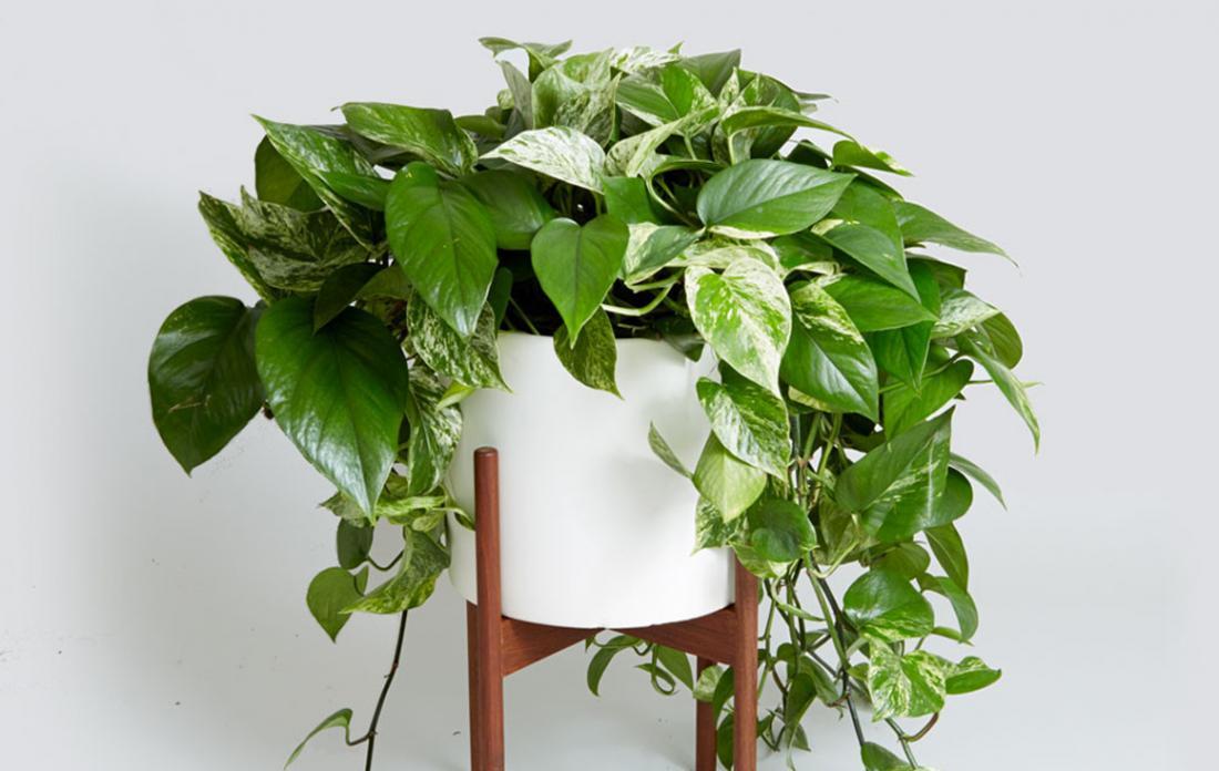 лунный календарь на сентябрь 2021 года, таблица для комнатных растений фото 2