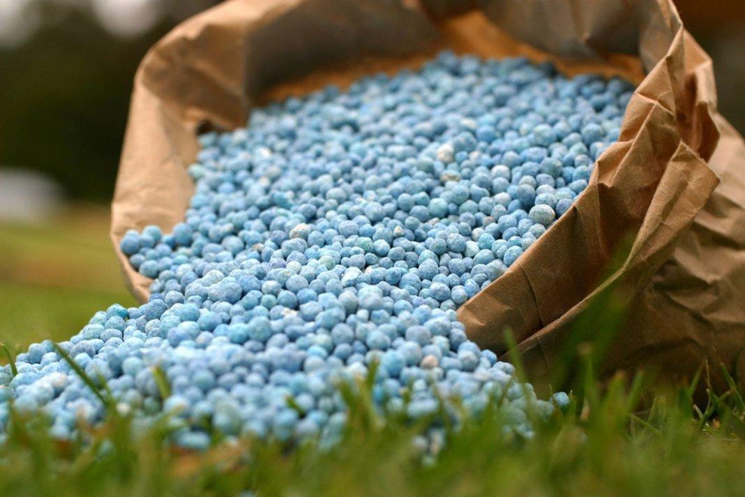 минеральные удобрения для подкормки клубники для большого урожая фото