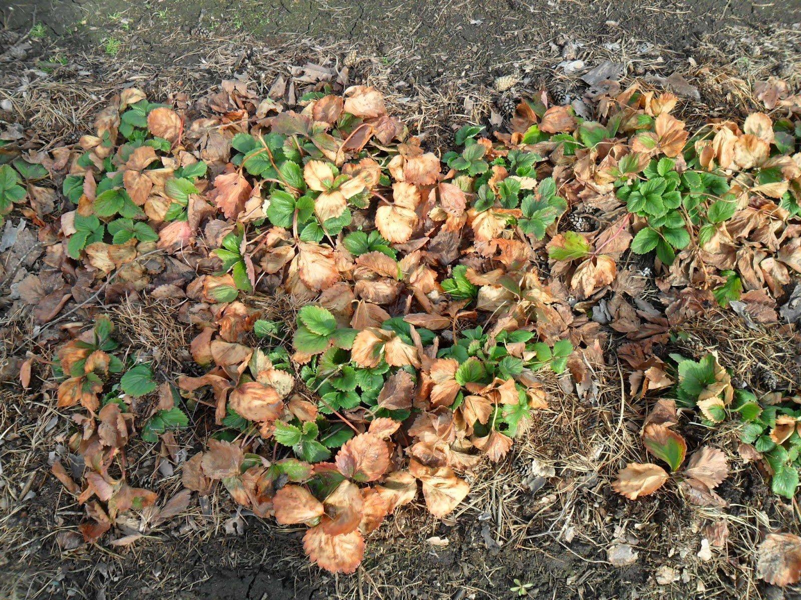 распространенные ошибки, приводящие к гибели растения фото
