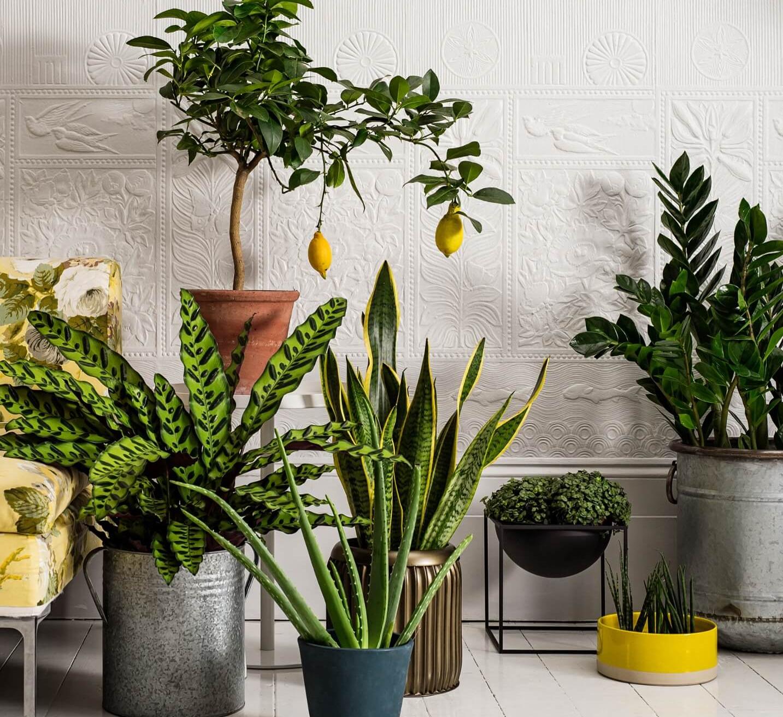 подробный Лунный календарь для комнатных растений на октябрь 2021 года фото 2