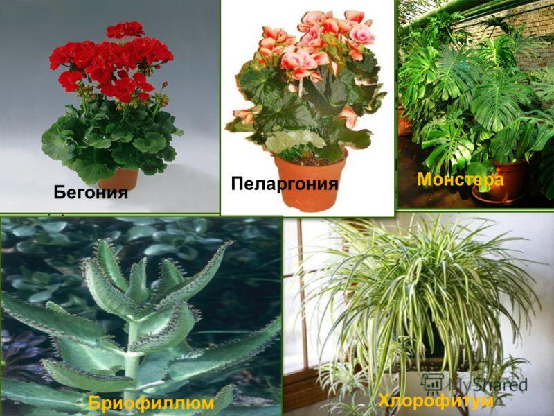 какие растения можно или нельзя пересаживать в октябре, список фото