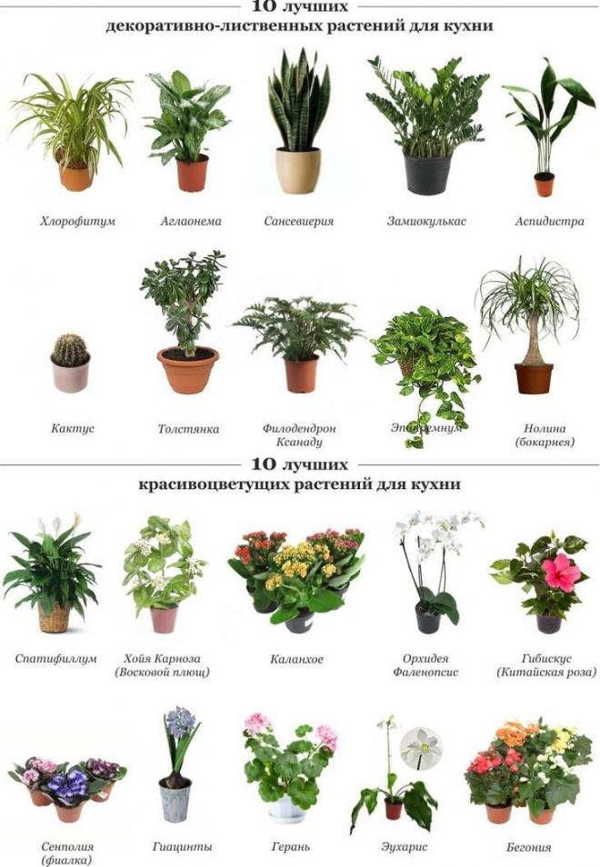 фото комнатных растений на подоконнике 1