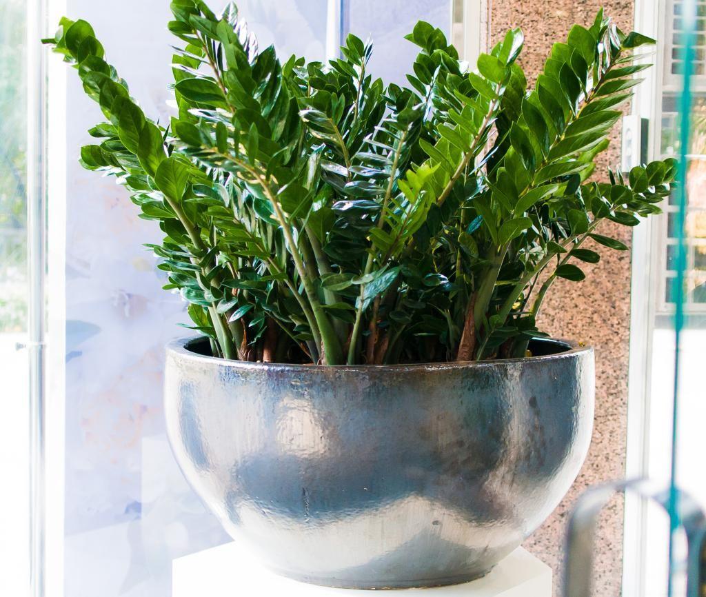 фото комнатных растений на подоконнике 2