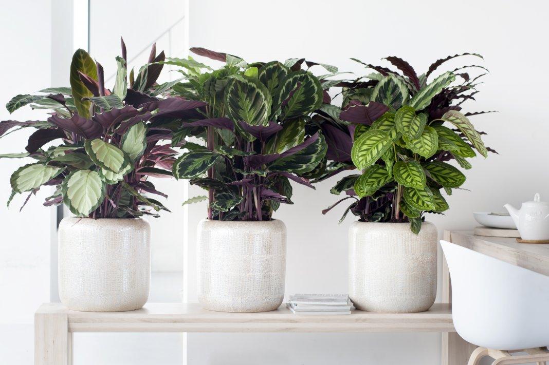 фото комнатных растений на подоконнике 3