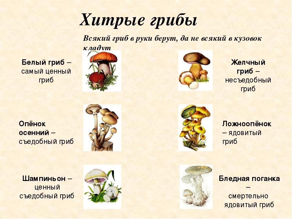 картинки грибов с названиями, съедобные и несъедобные фото и видео 6