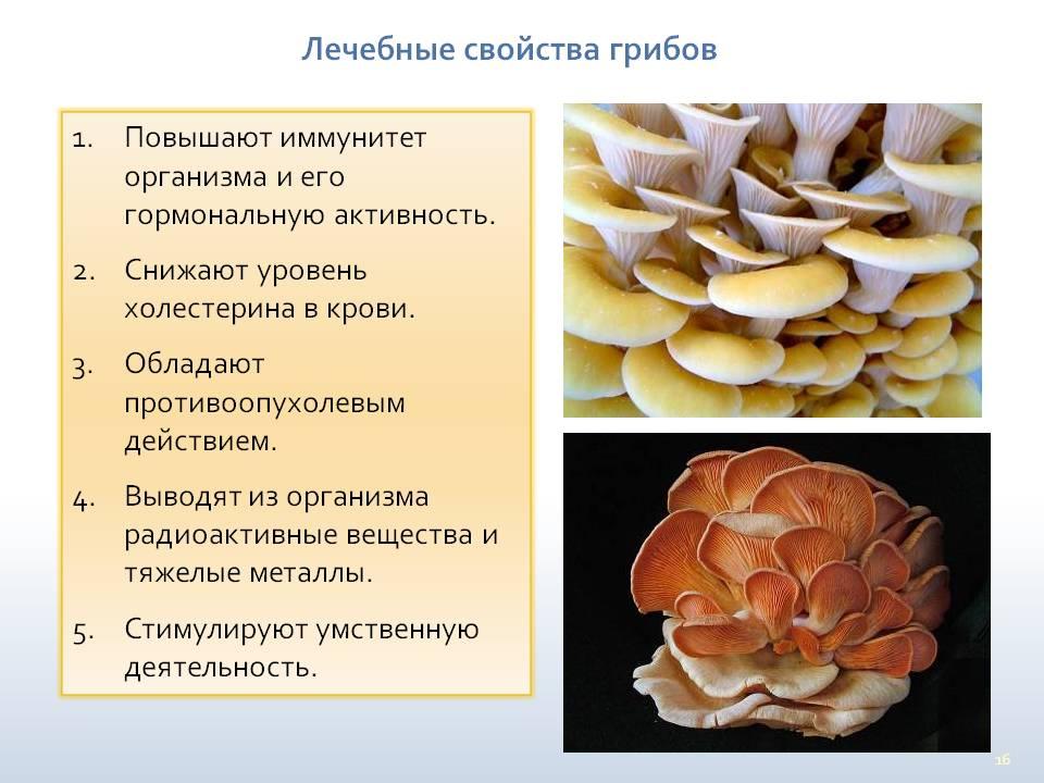 грибы, полезные свойства и состав фото 2