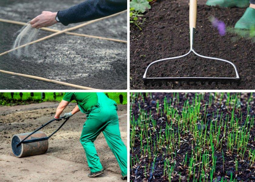 когда лучше всего сажать газон: рост газонной травы осенью или весной фото