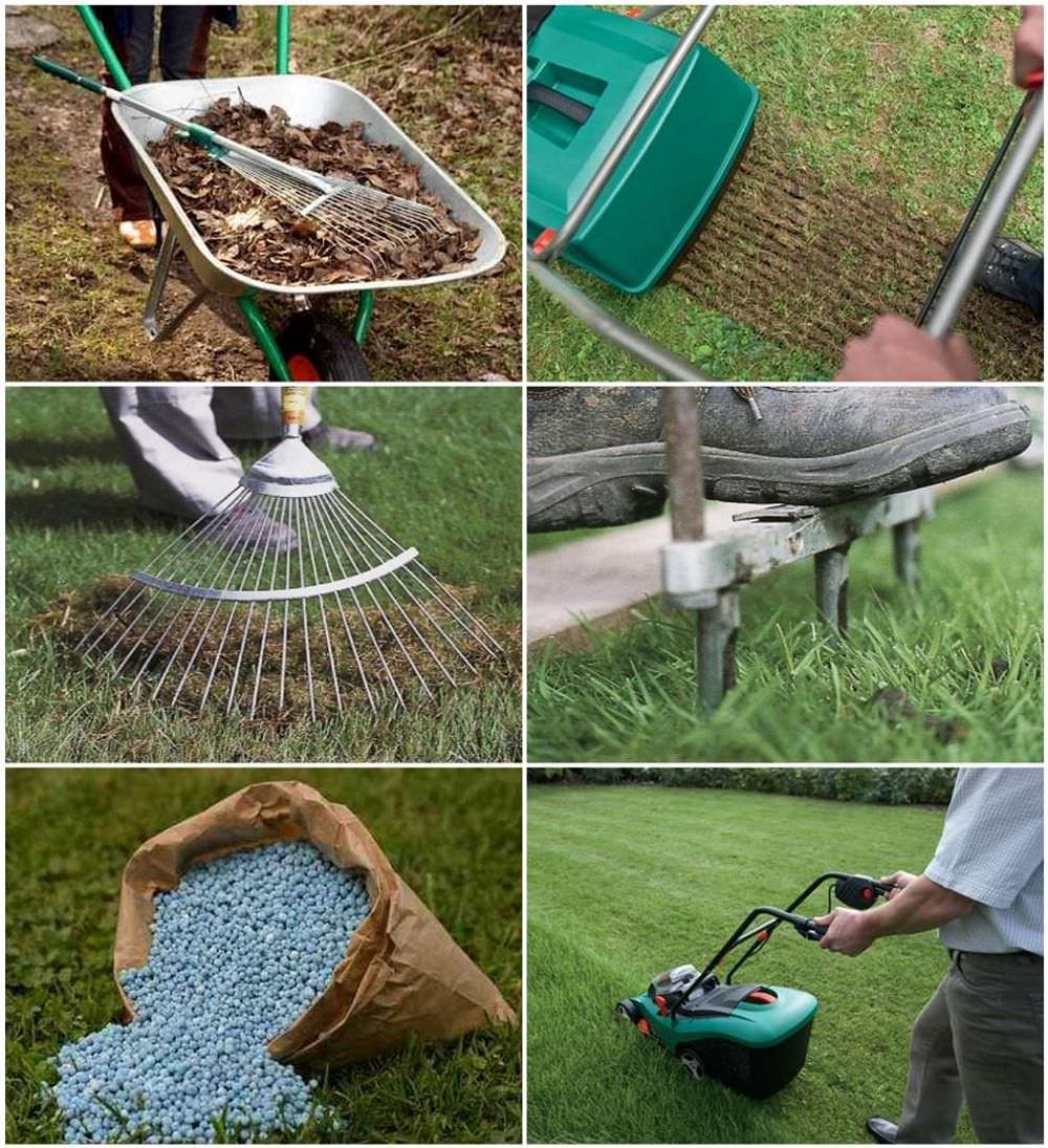 осенний посев, преимущества + фото 1