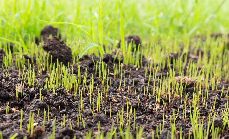 осенняя посадка газона, описание и особенности агротехники фото 1