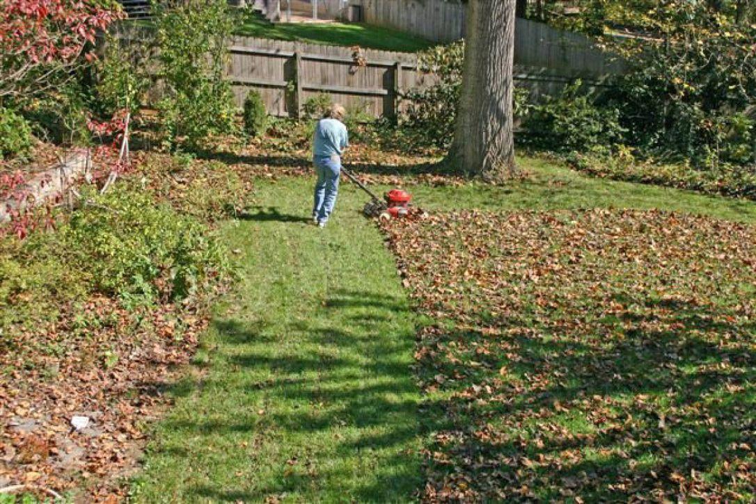 ороки осенней посадки газона фото