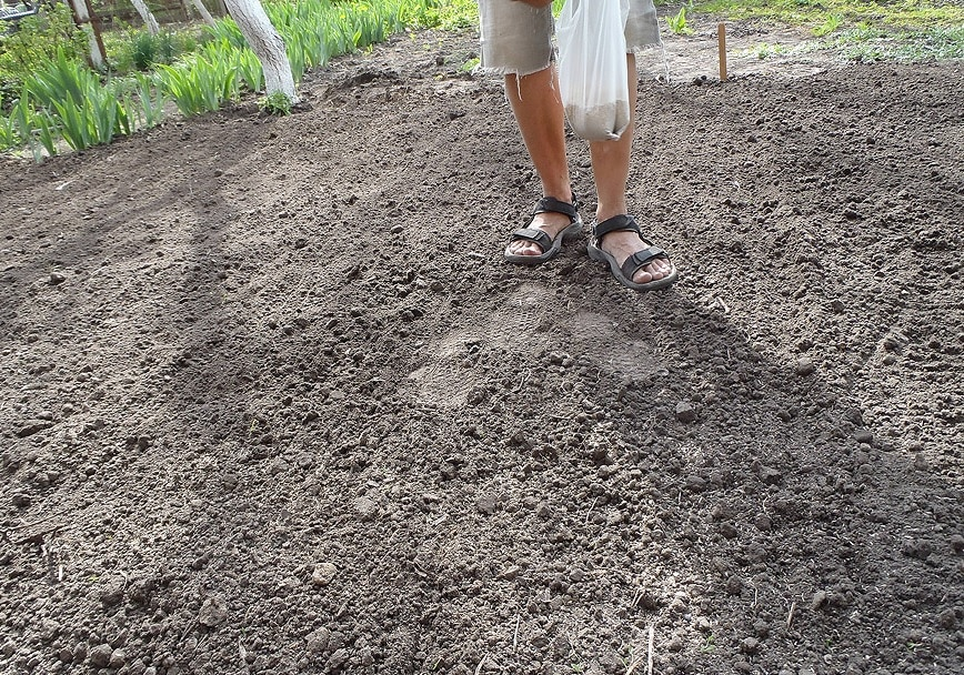 фото посадки газона осенью 1