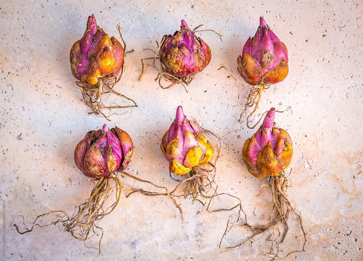 как правильно хранить луковицы до посадки осенью фото