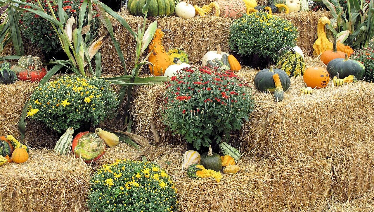 урожай тыквы на фото и видео 3