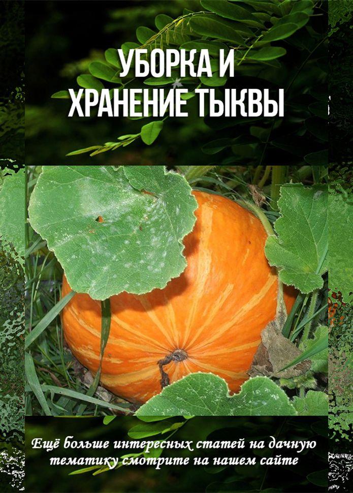 урожай тыквы на фото и видео 4