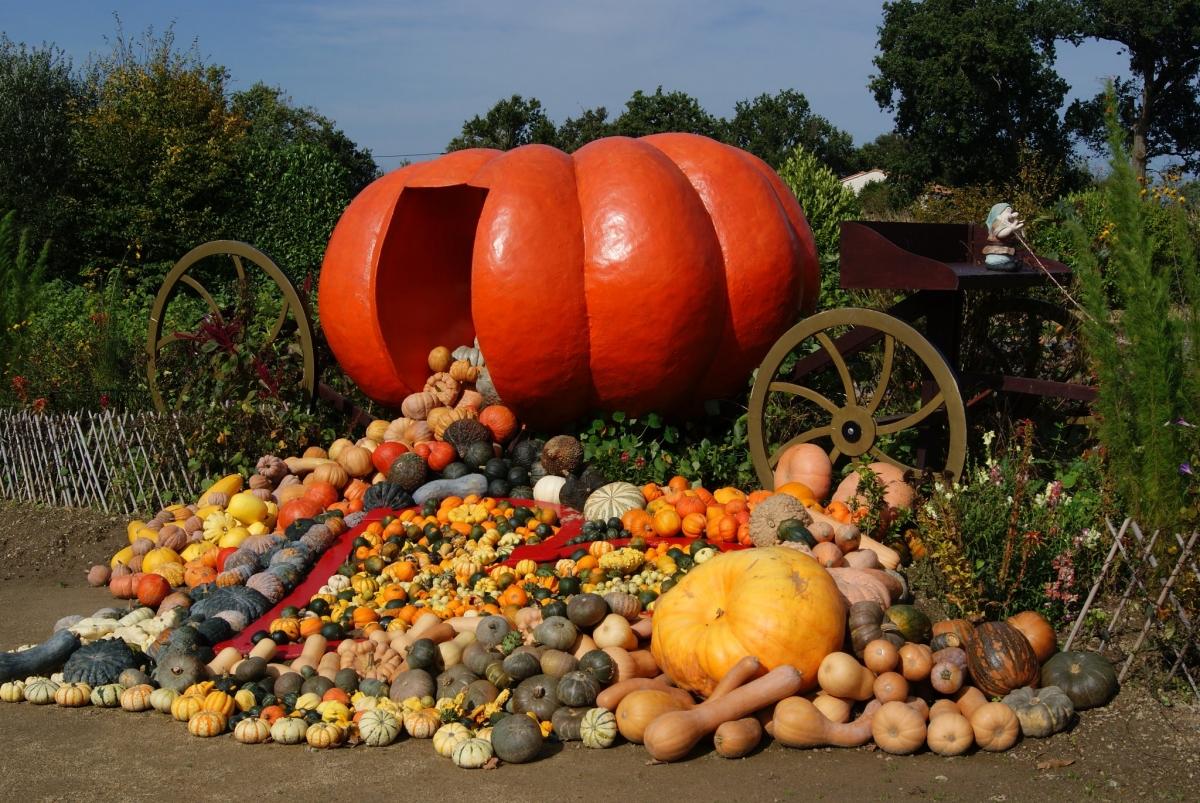 сроки сбора урожая по календарю фото