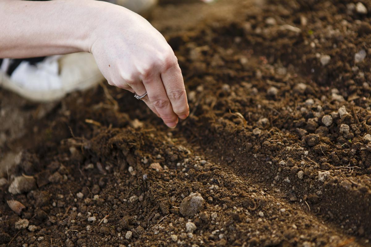 благоприятные дни для посева семян в 2021 году фото