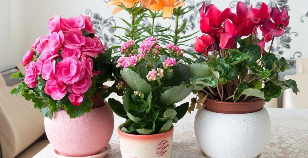 можно ли пересаживать комнатные растения и цветы в ноябре 2021 годы по Лунному календарю фото