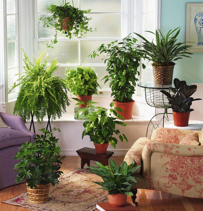 можно ли пересаживать комнатные растения и цветы в ноябре 2021 годы по Лунному календарю фото 2