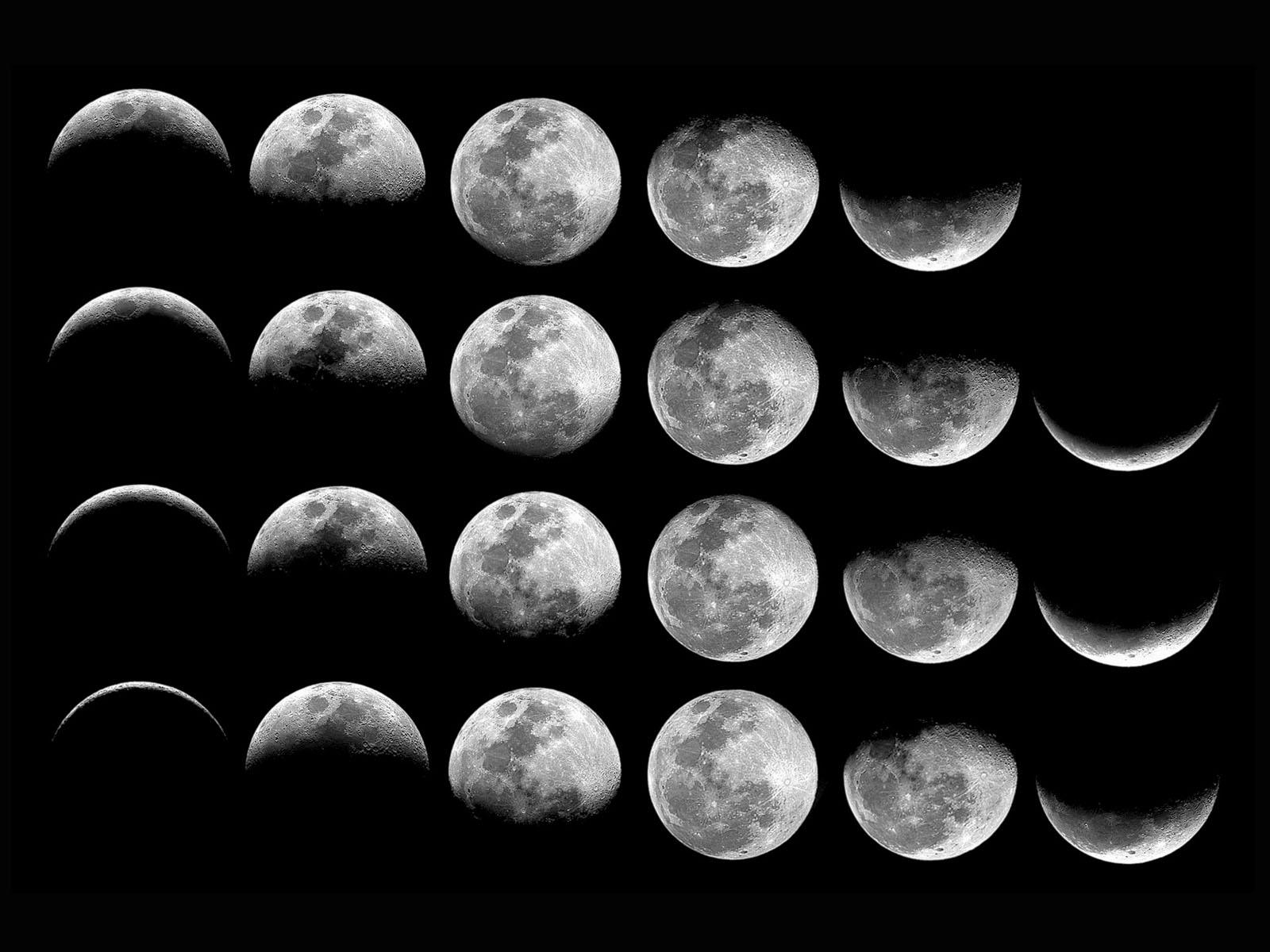 лунный календарь по уходу за комнатными растениями на ноябрь 2021 года фото