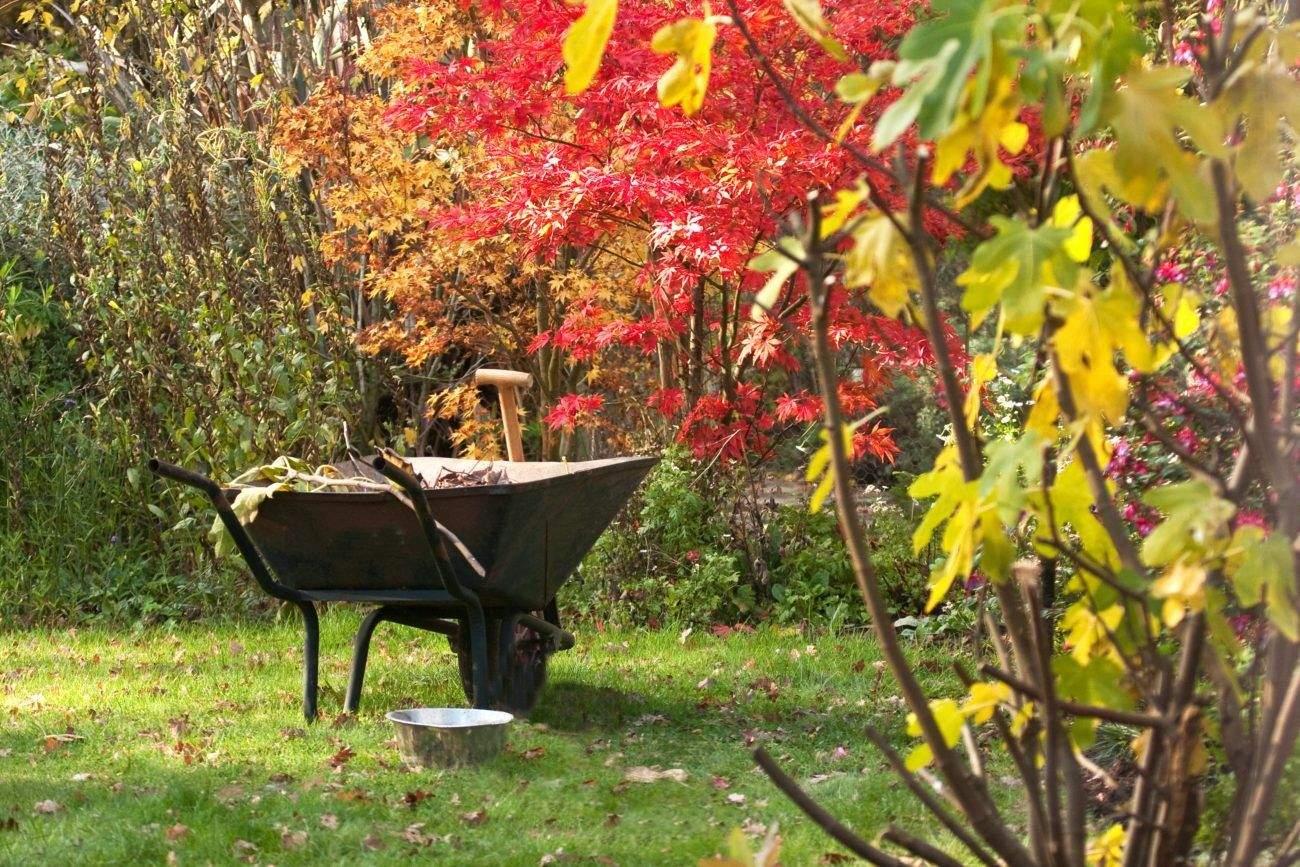 календарь на каждый день для садовода и огородника на ноябрь 2021 года фото 2