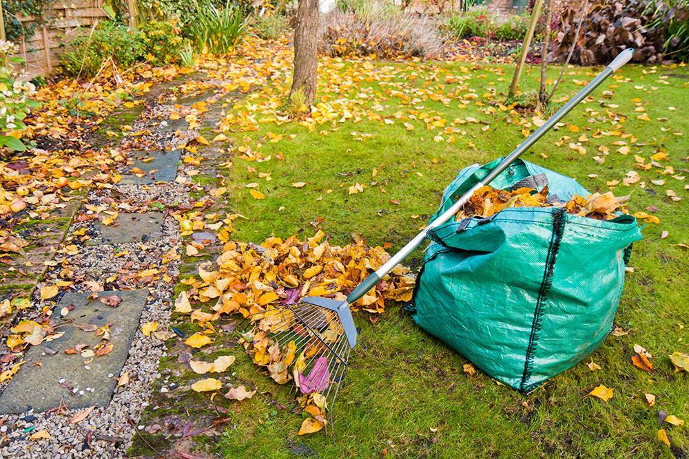 что нужно сделать, работа в огороде в ноябре 2021 года фото