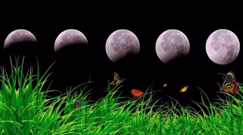 Лунный посевной календарь садовода и огородника на 2021 год, таблица посева фото