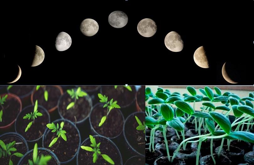 Фазы Луны в 2021 году фото