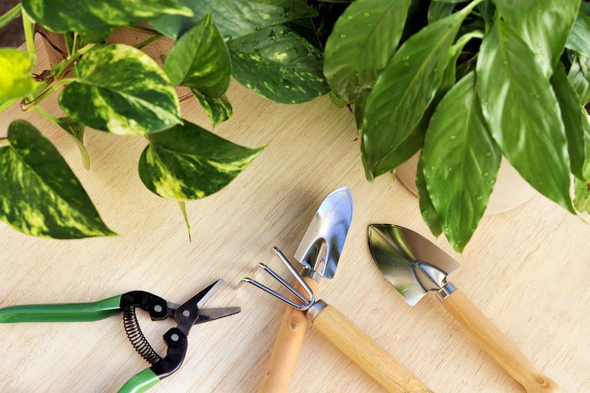 календарь огородника, цветника и садовода на 2021 год фото