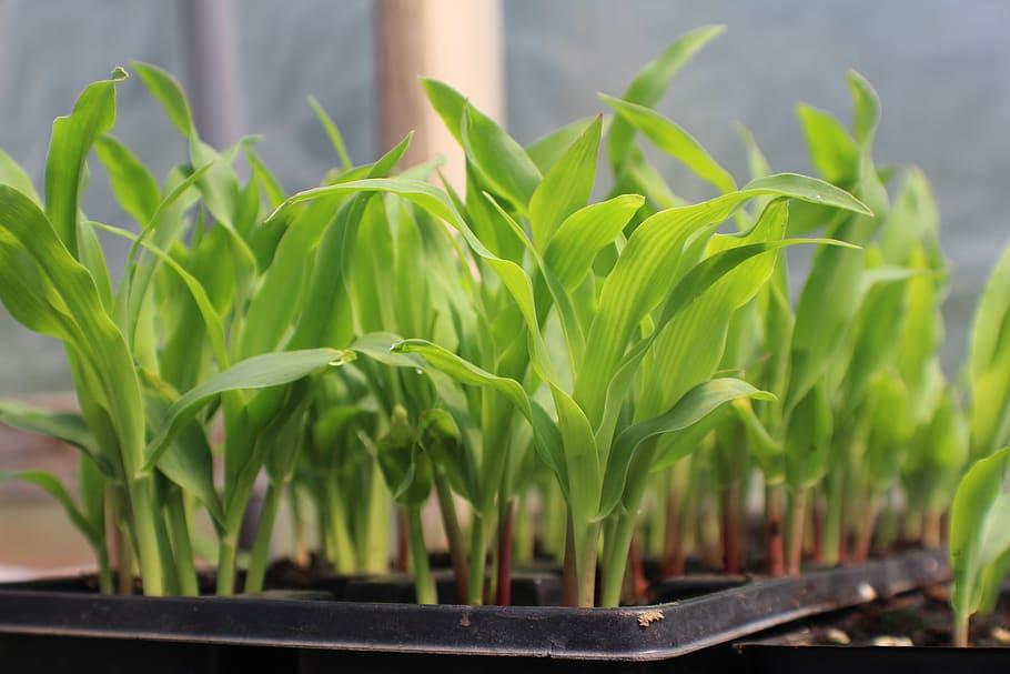 полноценное выращивание рассады на фото