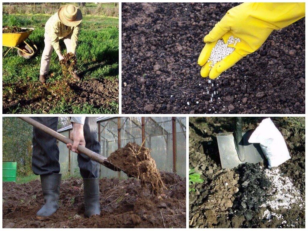 правильная подготовка почвы фото