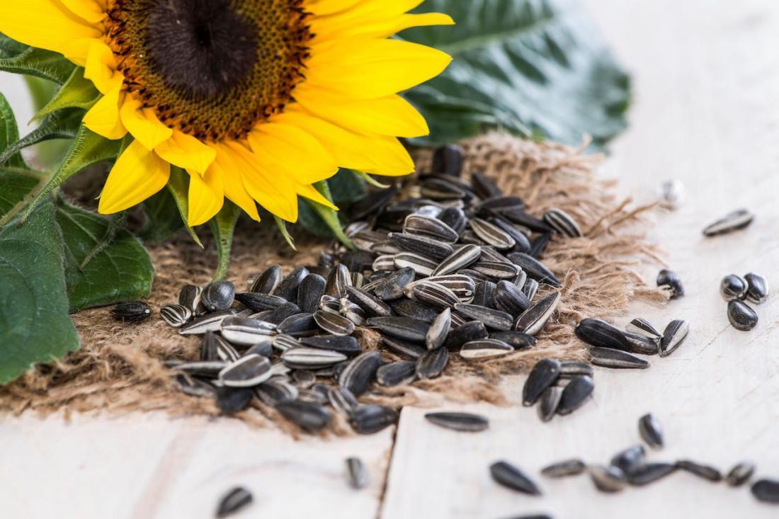 как выбрать семена подсолнуха фото