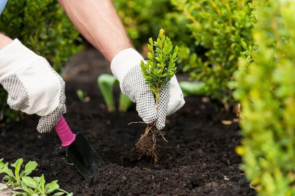 календарь для садовода и огородника фото
