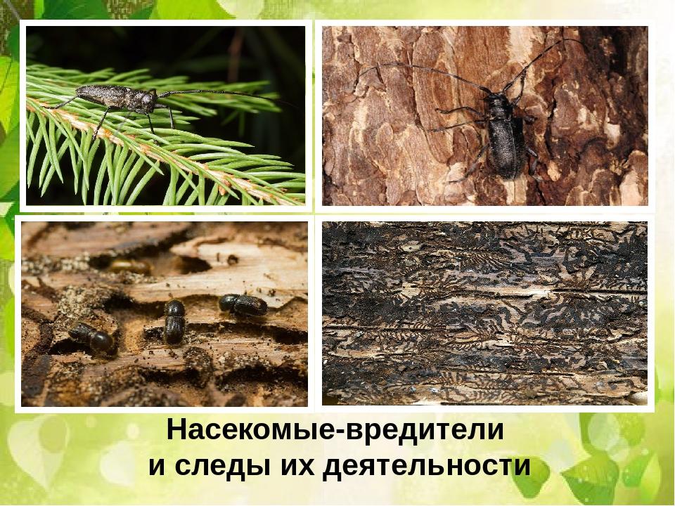 защита растений от вредителей, болезни и мороза фото
