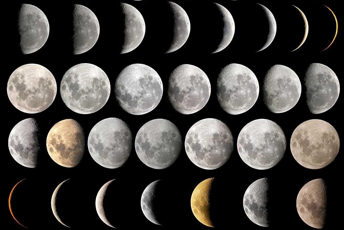 фазы Луны, влияние на посадку растений фото